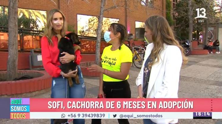 ¡Nos activamos por la adopción de cientos de perritos!