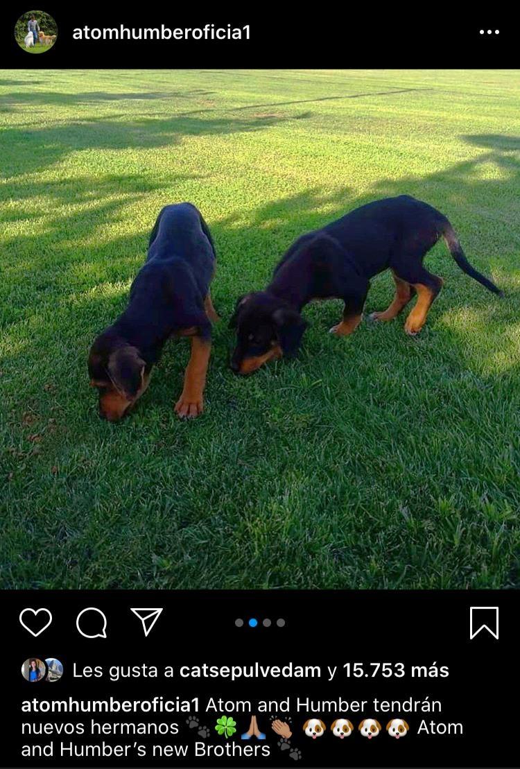 perros de alexis sánchez