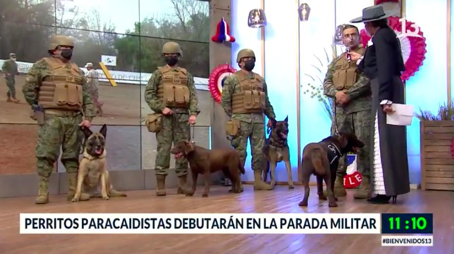 Perritos paracaidistas debutarán en la Parada Militar