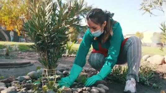 Jardinera de La Pintana