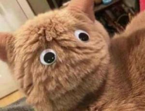 La cara de terror de un gato que ver por TV cómo unos leones devoran a su presa