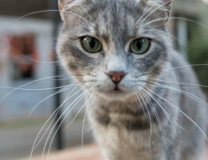 Descubren a un gato tocando el timbre de una casa como un humano