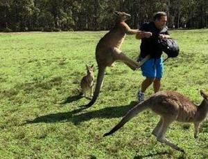 Canguros 'adictos' a las zanahorias atacan a turistas en Australia