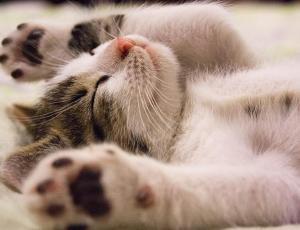 Estudio asegura que los gatos saben su nombre pero ignoran a sus dueños
