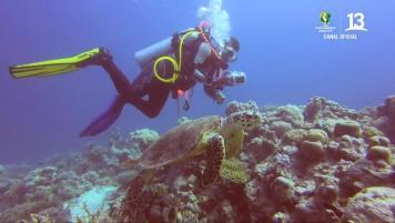Claudio buceó con tortugas en pleno Mar Rojo