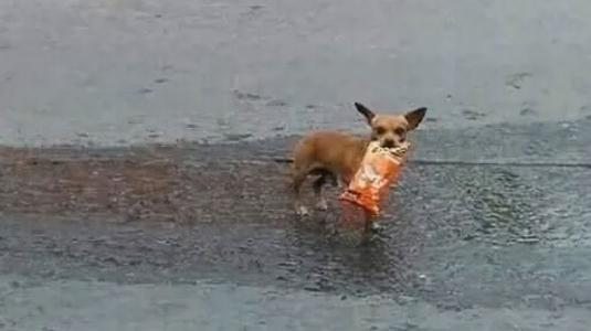 Historia de hombre que mandó a su perra a comprar en cuarentena se vuelve viral