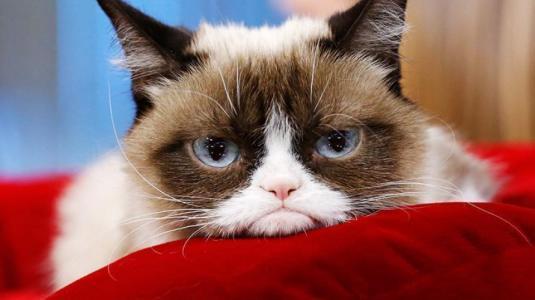 Luto mundial: Falleció Grumpy Cat, la gata más popular de internet