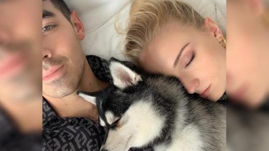 Sophie Turner y Joe Jonas sufren la muerte de su perro Waldo
