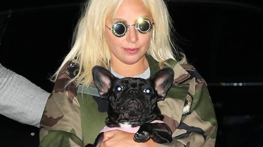 Disparan a paseador de perros de Lady Gaga y se roban a 2 de los canes