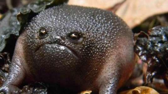 ¿La conocías? Este es el origen de la rana negra que se convirtió en meme