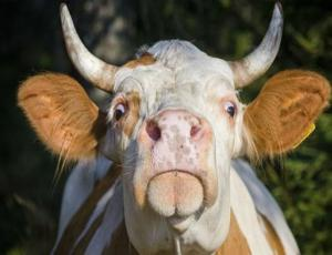 Activistas piden eliminar frases poco amigables con los animales