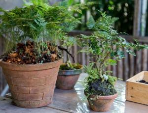 Las 9 plantas infaltables en nuestro jardín mágico