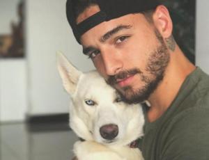 Celebrity pets: las mascotas famosas también tienen verano