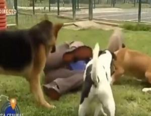 Perros revoltosos: entrevista se vuelve viral por el desastroso comportamiento de los animales