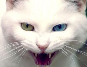 Gato salvó la vida de su familia mediante un mordisco