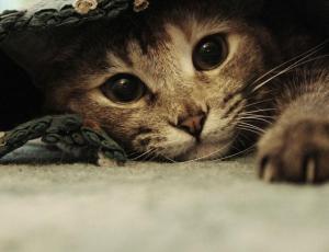 21 accesorios que cualquier amante de los gatos quisiera tener