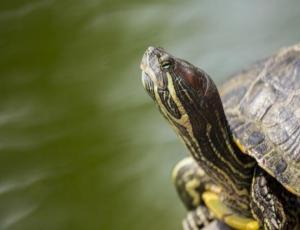 El tierno cartel de dos hermanos que buscan a su tortuga perdida