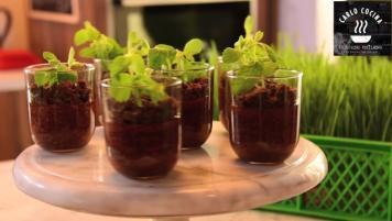 Plantitas de chocolate y chía