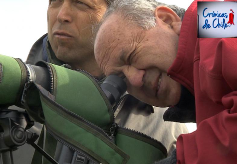 11 Noviembre 2015: Las dos caras de la fauna chilena